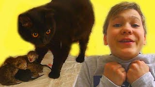 КОШЕЧКА Никиса РОДИЛА котят!!! Посмотрите! Теперь у нас 4 КОТЁНКА!