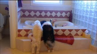 Ultimate Hide And Seek - Funny Fails Funny Dog - Funniest Video Funny Pranks