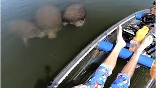 野生のマナティがあらわれた!仲間になりたそうに透明ボートに近づいてきたぞ(アメリカ)