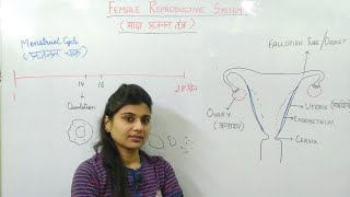 BIOLOGY मादा प्रजनन तंत्र  (FEMALE REPRODUCTIVE SYSTEM)