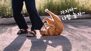 바짓가랑이를 붙잡고 늘어지는 고양이