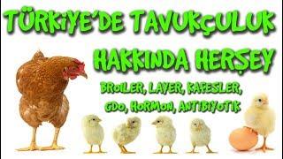 TÜRKİYE'DE TAVUKÇULUK ve YUMURTACILIK Kafesler, GDO, Hormon, Broiler, Layer | #2 Hayvansal Beslenme