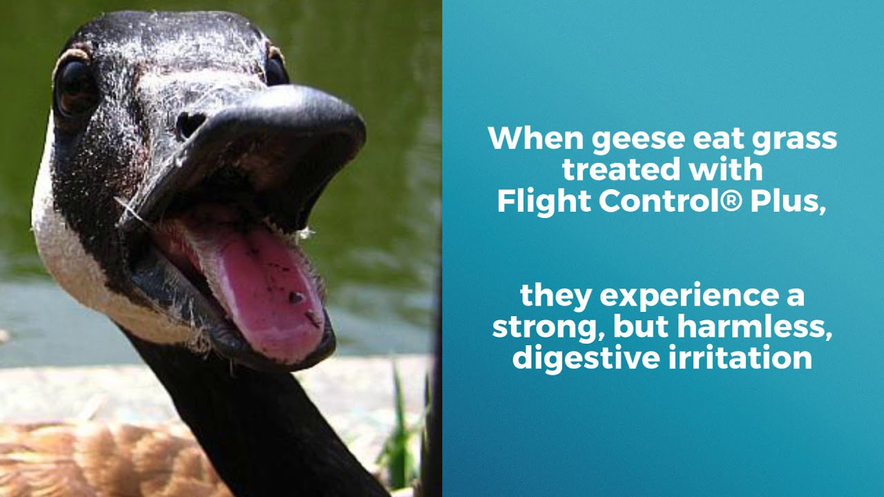Flight Control Plus - Find Professional Goose Control Applicators In