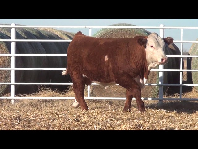 Express Ranches Lot 229
