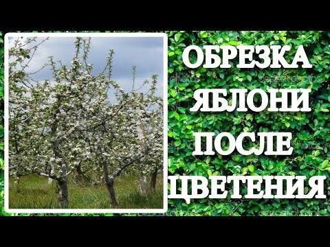 Вопрос: Можно ли обрезать деревья после цветения Не повредит ли им это?