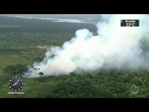 Amazônia tem 300 Km quadrados desmatados em apenas três meses | SBT Brasil (06/03/18)