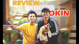 Review Kucing Okin