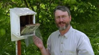 Homes for Nesting Bluebirds