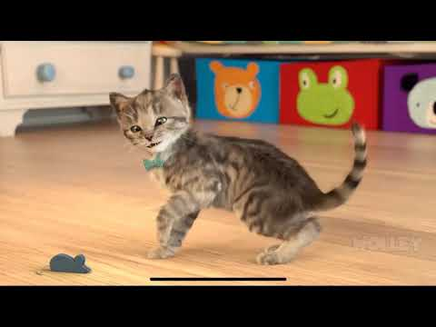 Little Kitten My Favorite Cat Pet Care - Play Cute Kitten Animation Mini Games For Children