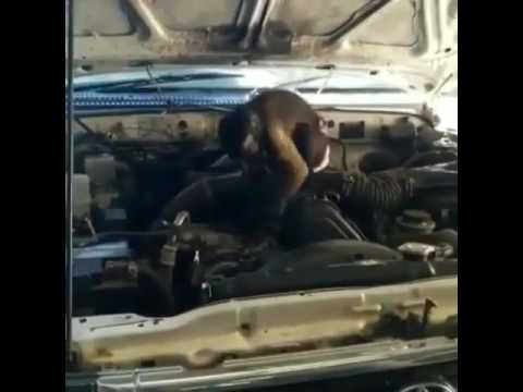 Monkey Car Repair 101 With A Wrench Youtube