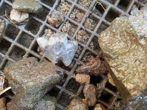 Ohio Arrowhead TREASURE Hunting Archaeology GEM Agate