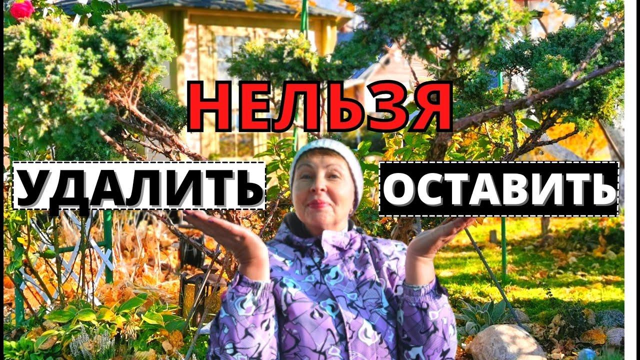 По следам призыва Ивана Русских- спилить или оставить МОЖЖЕВЕЛЬНИК?