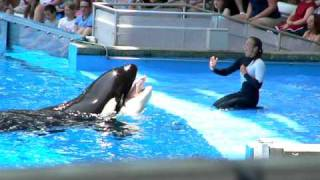 Dawn Brancheau performing at Seaworld Orlando with Killer Whale (Orca)