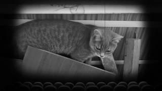 Приколы про котов  Кошка животное беспокойное