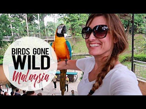 Birds Gone Wild | KL Bird Park | Kuala Lumpur, Malaysia