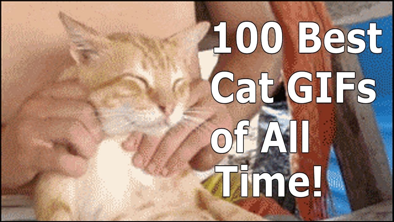 Funny cats gif by CatVid Repository