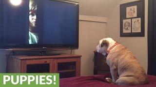 Bulldog tries to warn little girl of danger in horror movie