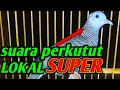 Perkutut Lokal Asli Ampuh Pikat Perkutut Macet Bunyi Audio(.mp3 .mp4) Mp3 - Mp4 Download