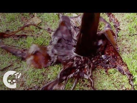 Piñata   Short Horror Film   Crypt TV