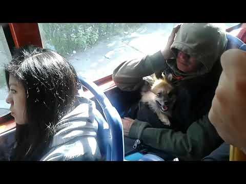 Dog in bus Quito Ecuador