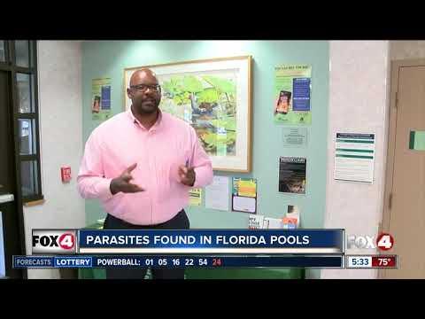 Parasites Found In Florida Pools