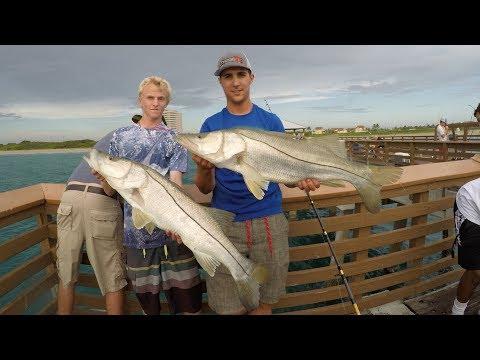 $@!& Hit The Fan! EPIC Snook Feeding Frenzy!!!  (Juno Pier Snook Fishing)