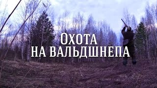 Охота на вальдшнепа(Наступила весна и я отправился на одну из красивейших и поэтичных охот. Охоту на вальдшнепа на весенней..., 2016-04-29T12:09:44.000Z)