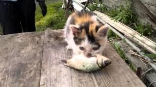 Маленькая кошка. Эпизод 1. Пробуждение зверя!