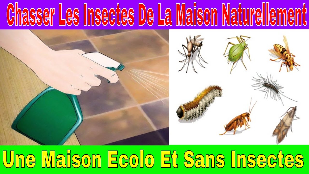 chasser les insectes de la maison naturellement une maison ecolo et sans insectes youtube. Black Bedroom Furniture Sets. Home Design Ideas