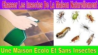 Chasser Les Insectes De La Maison Naturellement - Une Maison Ecolo Et Sans Insectes
