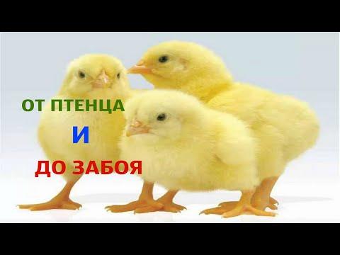 ТРИ БЛЮДА С БАНАНОМ!)из YouTube · Длительность: 2 мин30 с
