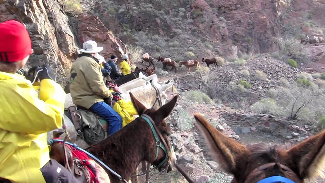 Grand Canyon Mule Trip YouTube