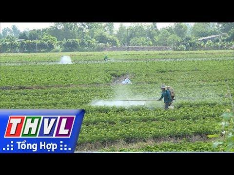 THVL   Cảnh báo đất trồng khoai lang bạc màu