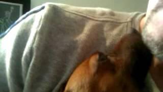 My Min Pin Dog , Martini, Can Trim Up A Beard! Cute Dog Trick!