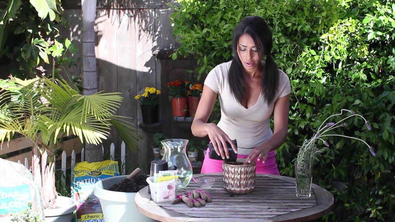 Chef Garden: Germination Of Lavender Seeds : The Chef's Garden