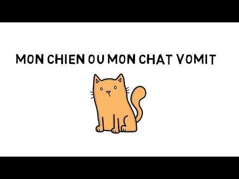 Que Faire Quand Mon Chien Ou Mon Chat Vomit ?