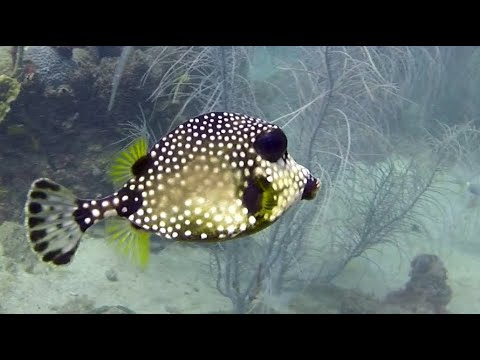 Diving in the Caribbean / St. Lucia Island