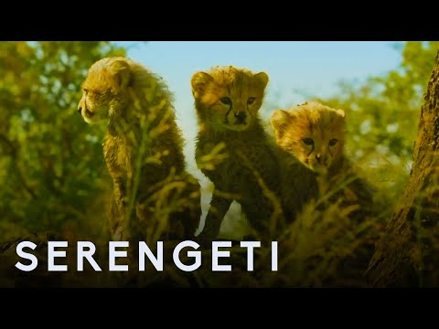 Serengeti: First Look Trailer | New John Boyega Series | BBC Earth