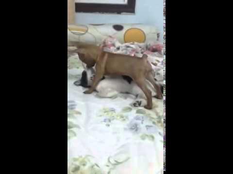 Chó cưỡng hiếp mèo.