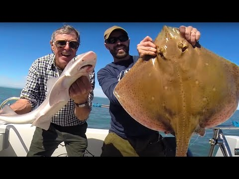 Father & Son Make Epic Catch - Big Rays, Conger Eel, Smoothound, Bass