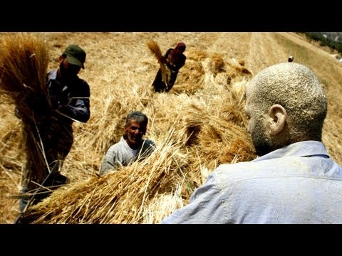 Mosaic News - 08/24/12: Israel Takes Aim at Palestinian Agricultural Sector in Jericho