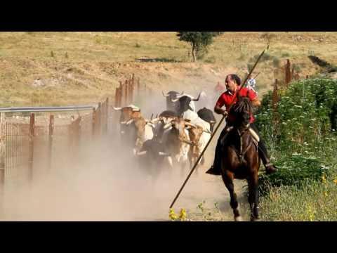 Encierro Brihuega 2016, los toros