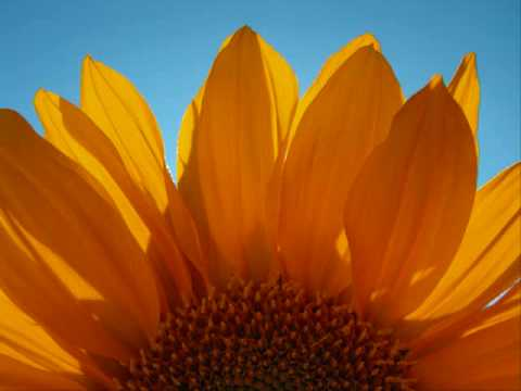 """Sunshine"" by Steve Azar"