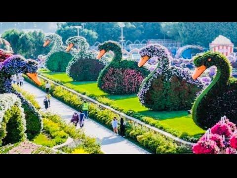 Miracle Garden Dubai 45 Million Flowers Largest Flower Garden In The World 2020 2021 Youtube