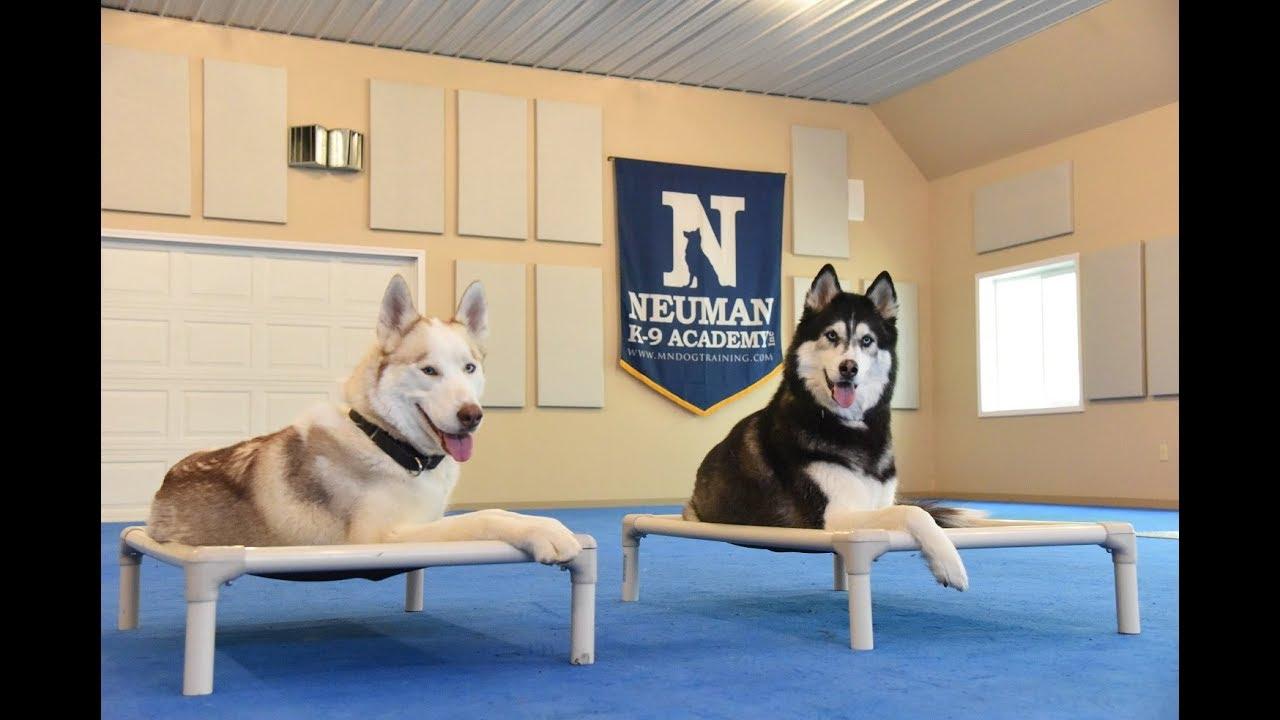 Lyka Boot Camp Dog Training Video Demonstration Youtube