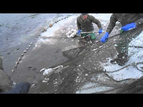 ловля рыбы в прудах видео
