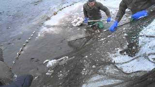 Невод...(Ловля рыбы неводом в пруду..., 2014-01-21T12:25:47.000Z)