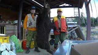 伊豆の猪狩り V 2015 2 1 最大の猪を狩る Охота на кабанов в Японии