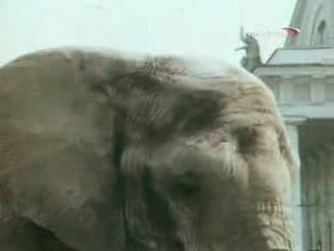 Розовый слон песня из фильма боба и слон