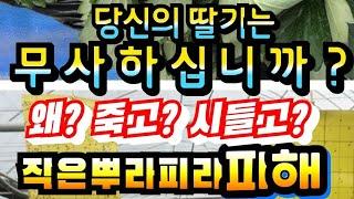 전라북도스마트팜 딸기재배하우스 딸기코빨강코  딸기정식 …